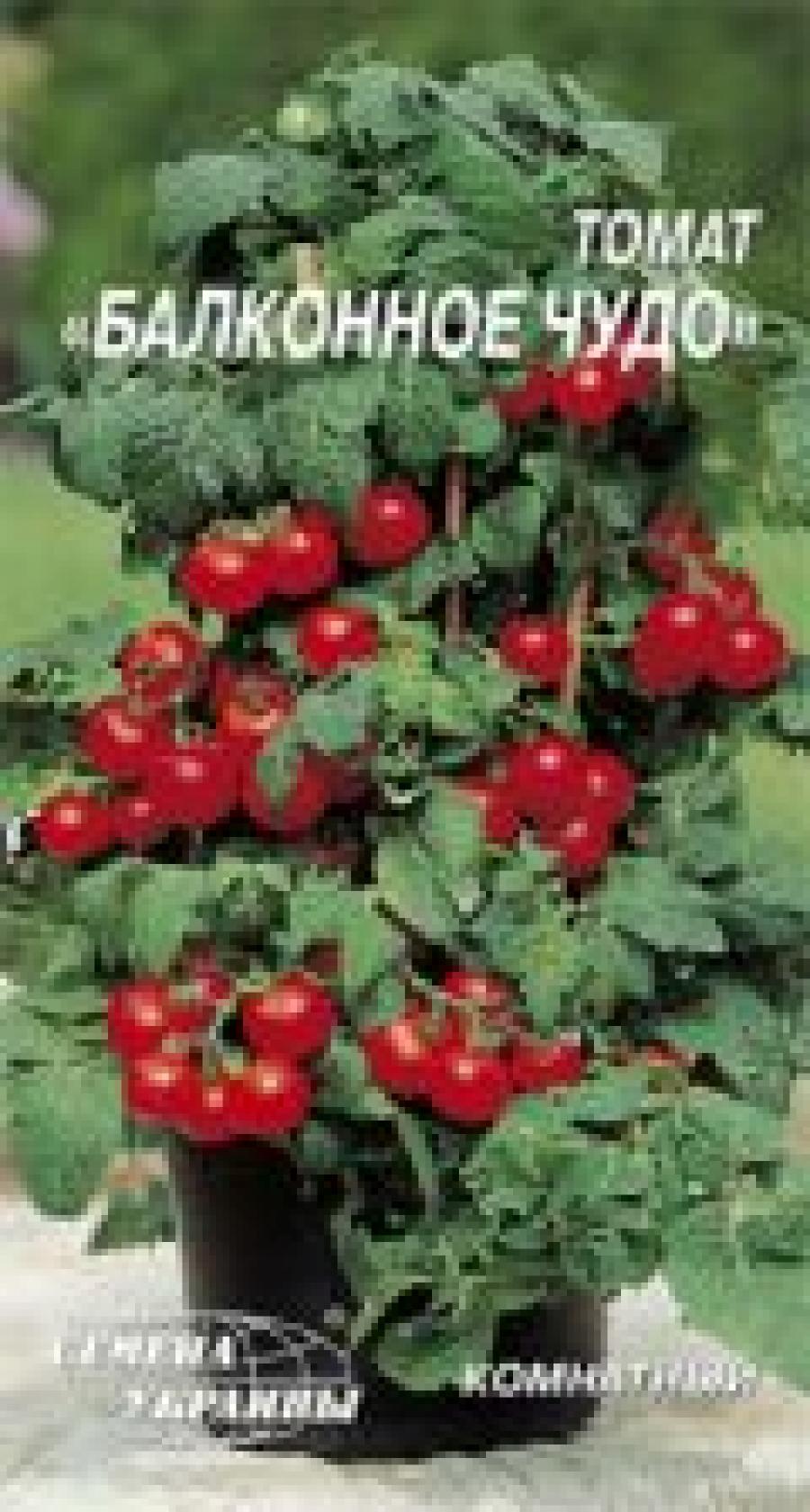 ? томат семена украины балконное чудо 0,2 г * купить в киеве.